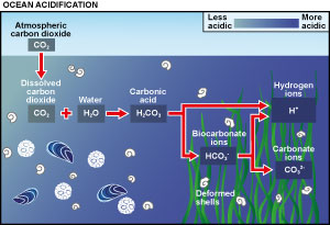 The chemical process of ocean acidification
